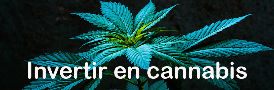 Invertir en Cannabis 2019